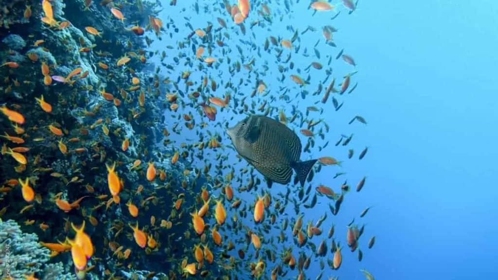 Coulourful corals and fish of Red Sea - Hamata, Egypt | Kiterr.com