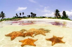 Starfish Point, Grand Cayman // Kiterr.com